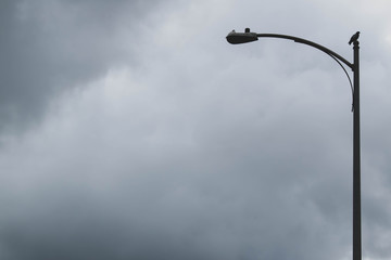 Bird, pigeon, perched on top of a street light, on the right side of the image, with stormy clouds as background. Concepts illustrated weathering out the storm, lights out, power outage from a storm,  Fotomurales