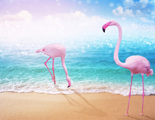 Foto auf Leinwand Flamingo love couple pink flamingo on beautiful sandy beach and soft blue ocean wave summer concept background