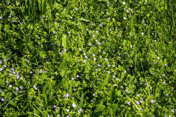 Tekstura trawa zieleń kwiaty tło - fototapety na wymiar