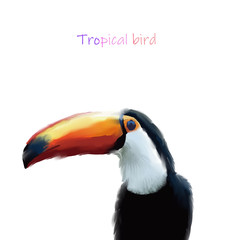 Foto op Plexiglas Toekan Hand drawn beautiful tropical bird toucan illustration