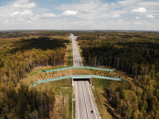 Wildlife Crossing - Bridge over a highway in forest Wall mural