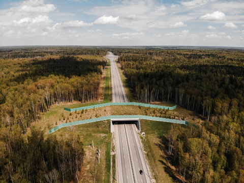 Wildlife Crossing - Bridge over a highway in forest