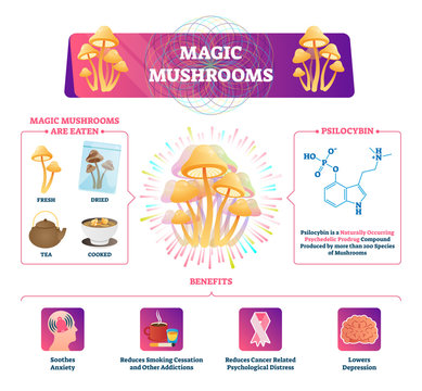Magic mushrooms vector illustration. Labeled characteristics graphic scheme