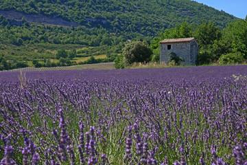 Spoed Fotobehang Lavendel Camp de lavande