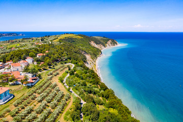 Aerial view of vineyard by the sea and seaside with viticulture Wall mural