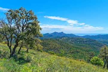 View of Esterel mountains on the mediterranean coast in french riviera
