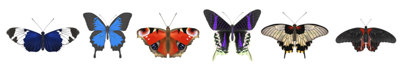 Photo sur Aluminium Papillons dans Grunge Set of butterflies. Vector illustration. EPS 10