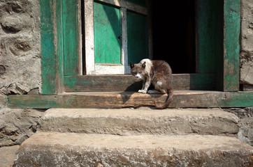 Thin, dirty, scruffy grey and white cat looking mad and scary sitting on doorway of old house. Solukhumbu, Nepal