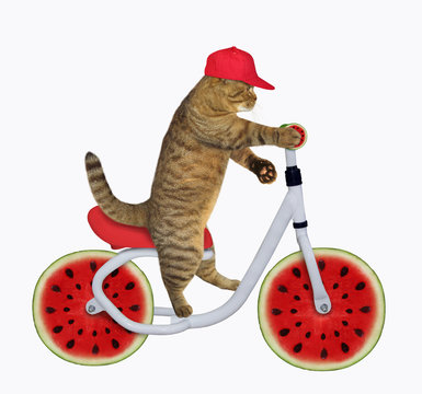 The cat in a red cap is riding the bicycle. The wheels look like round watermelon slices. White background. Isolated.