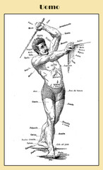 Curious vintage table describing in Italian the name of the external body part of a human male