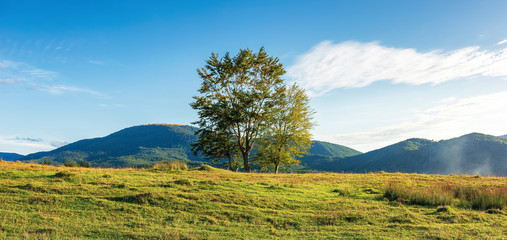 countryside panorama with trees on the hill. beautiful autumn scenery in evening light. grassy meadow in front of a mountain range in the distance. fluffy clouds on the blue sky
