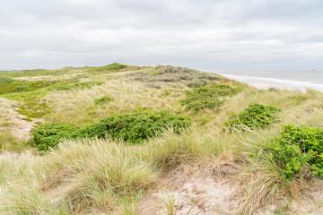 Wall Mural - Dune with beach grass on Sylt island.