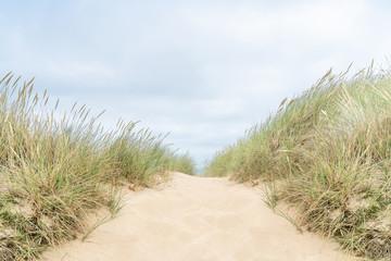 Dune with beach grass on Sylt island.