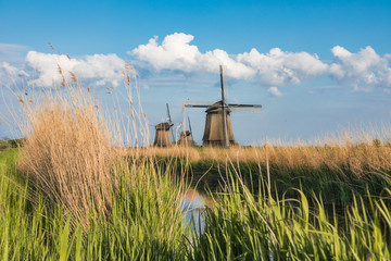 Dutch landscape with three windmills in the background..