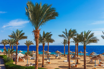 Sunny resort beach with palm tree at the coast shore of Red Sea in Sharm el Sheikh, Sinai, Egypt, Asia in summer hot. Bright sunny light Wall mural
