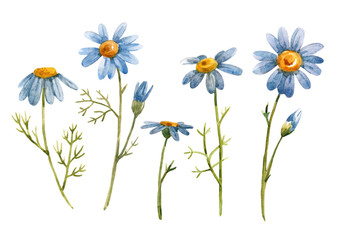Watercolor blue chamomile daisy flower Wall mural