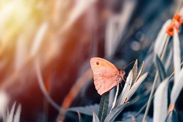 Nice butterfly with closed wings sit on grass. Toned photo