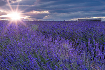 Printed kitchen splashbacks Eggplant French landscape - Valensole. Sunset over the fields of lavender in the Provence (France).