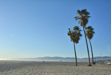 Palm trees on Venice Beach, LA