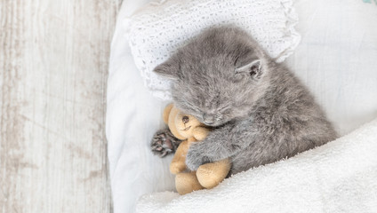Baby kitten sleeping with toy bear on the bed under blanket. Top view. Empty space for text
