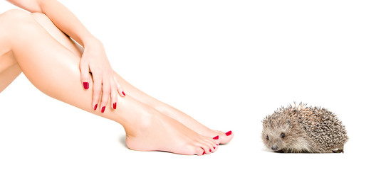 Charming hedgehog near beautiful  slim female legs isolated on white background