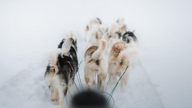 Dogs walking in snow