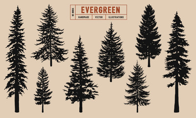Evergreen tree silhouette vector illustration hand drawn