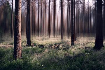 Surrealer Wald mit unscharfen Hintergrund