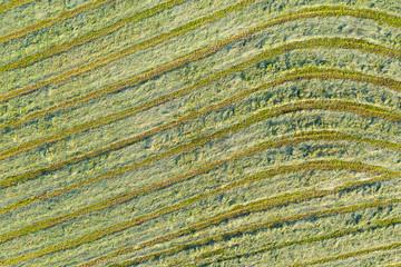 Blick von oben auf eine gemähte Wiese mit Heu zum Trocknen
