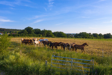 Pferde auf einer Koppel am Abend