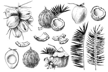 Set of hand drawn coconuts.