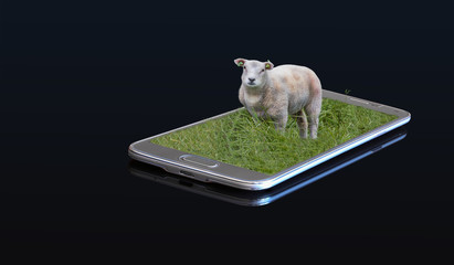 3D photo on a smartphone - Lamb on a meadow