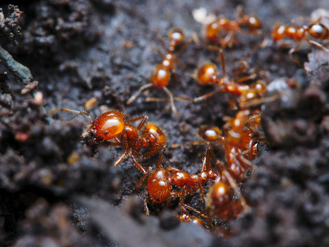 the fire ant colony is building a road to pass to the nest