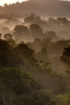 Rain Forest at Dawn