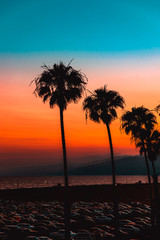 Row of palm trees in parking lot at sunset