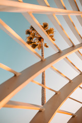 View of palm three through wooden slats
