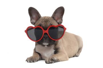 In de dag Franse bulldog French Bulldog