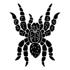 Tarantula icon. Simple illustration of tarantula vector icon for web design isolated on white background