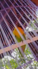 Balinese Parrot