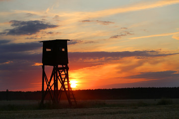 Papiers peints Chasse Hunting pulpit glazed at sunset, in it the hunter is waiting for the game