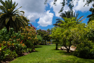 A tropical garden scene. The lush green colors come from the Caribbean sun. Pic taken in the Botanical Gardens in Grand Cayman