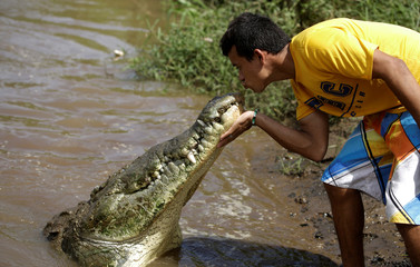 Juan Cerdas, whose hobby is feeding wild crocodiles, kisses a large crocodile in the Tarcoles River, a river with one of the highest crocodile population in the world, in Tarcoles