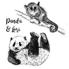 Lemur Lori and Panda, exotic forests and zoo animals vector illustration, hand drawn sketch, black and white. Lory and panda and lettering drawning.