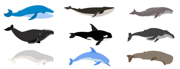 Whale icons set. Flat set of whale vector icons for web design Wall mural