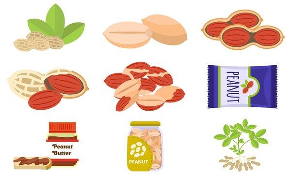 Peanut icons set. Flat set of peanut vector icons for web design
