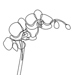 Hand drawn orchid flower. One line drawing continuous illustration vector. Minimalist art design of minimalism on white background.
