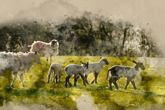 Digital watercolor painting of Beauitful landscape image of newborn Spring lambs and sheep in fields during late evening light