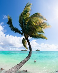 Beautiful shot of a palm tree on the beach with a shirtless male standing in water in the background