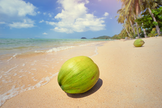 Tropical paradise. Green coconut on white sand beach with palms.