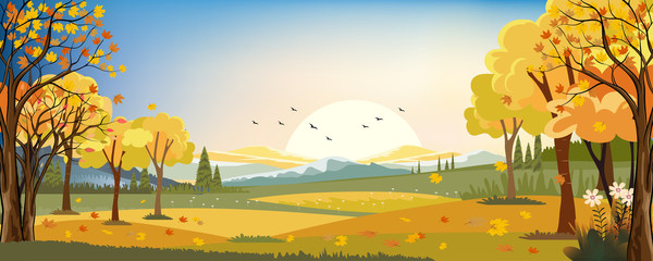 Garden Poster Pistachio Panorama landscapes of Autumn farm field with maple leaves falling from trees, Fall season in evening.